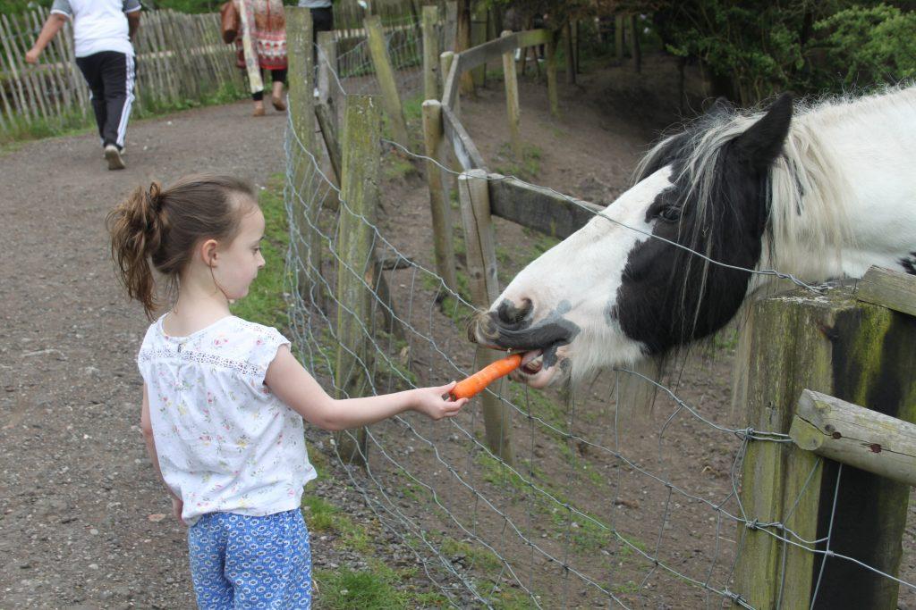 Lancaster Farm - Feeding the Horses